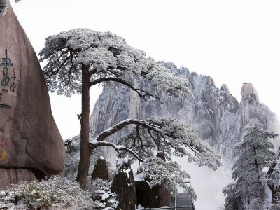Welcome Pine Mount Huangshan